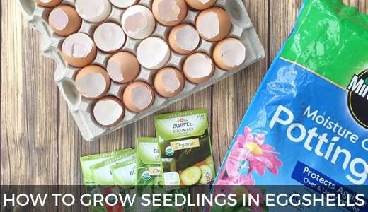 How to grow seedlings in eggshells | How to start seeds | Planting seeds | Eggshell seed starters | GinaKirk.com @ginaekirk